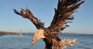 Stunning Driftwood Creations By Jeffro Uitto
